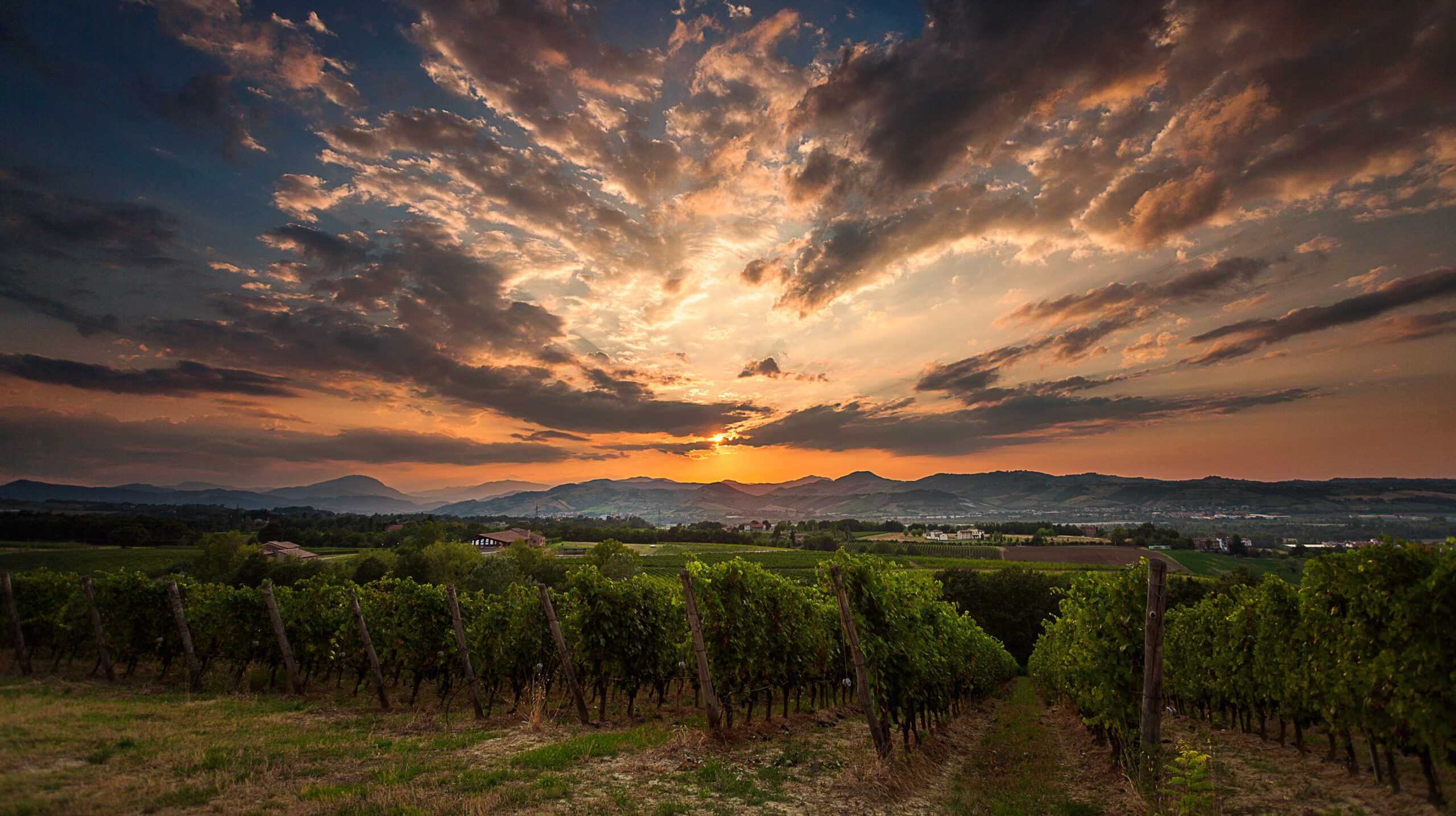 Be charmed by the unexpected-Monte delle Vigne